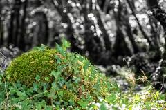 Nature verte (dfouchs) Tags: nature fort sony alpha bretagne finistere