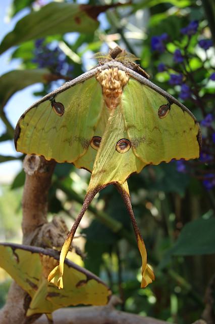 ButterflyPavilion5-moth