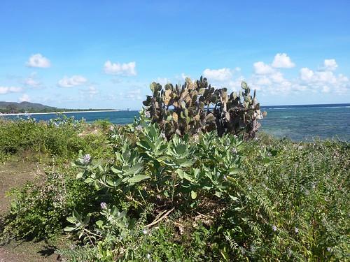 Sumbawa 4-Plage de Lakey (48)