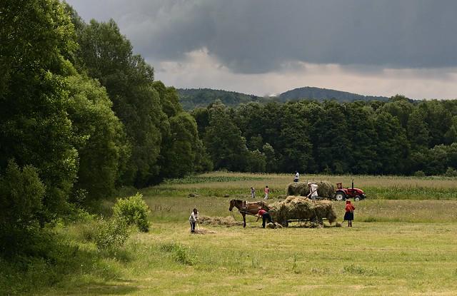farmers Romania
