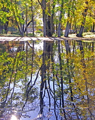 Autumn reflections (mariposa lily) Tags: autumn trees reflection tree fall water leaves reflections leaf fallcolors olympus autumncolors waterreflection waterreflections reflectionsinwater sp550uz sp550 olympussp550uz 550uz