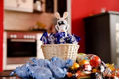 Lord of the candy (Blacklightdesign) Tags: portrait easter verrckt candy chocolate lord sugar ostern blitz schokolade figur hase lind 2012 zucker ei raving milkyway durchgeknallt strobist rabbid ravingrabbid bwaaa ssigkeiten lordofcandy