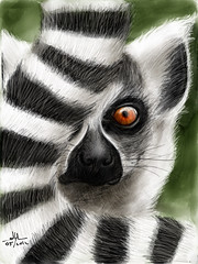 Ring-tailed Maki or Lemur (Lemur Catti - or in Dutch Ringstaartmaki) #MadeWithPaper (WouterZArtZ - Dutch Designs!) Tags: white black art illustration painting zoo sketch graphic drawing maki ngc digitalpainting lemur drawn madagascar primate ipad ringstaartmaki madewithpaper flickraward ringtailedmaki flickraward5 ipad2 flickrawardgallery paperapp paper53 learningpaper