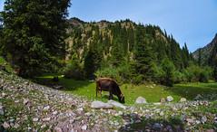 2 (283) (sasiphotography) Tags: nature moon landscape snow mountains rock climbing hiking horse kyrgyzstan dog lake beautiful hill pass river