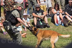 Military Police K-9 Demonstration (jag9889) Tags: convoytoremember2016 jag9889 police dog k9 policeofficer birmenstorf cantonaargau demonstration switzerland canine outdoor 2016 europe 20160813 animal ag aargau ch car convoytoremember cop creature event exhibition finest firstresponder helvetia kantonaargau lawenforcement military militr officer oldtimer schweiz show suisse suiza suizra svizzera swiss vehicle