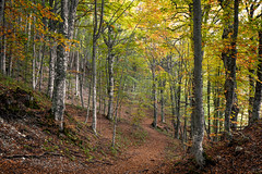 2016-10-01 08.20.16 (Jose.Phan81) Tags: autumn fall colors nature forest wood trees light