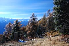 L'inizio dell'inverno (supersky77) Tags: alps alpes hoarfrost brina larch larice alpi aosta valdaosta larix chatillon zerbion galaverna larixdecidua monteemilius emilius