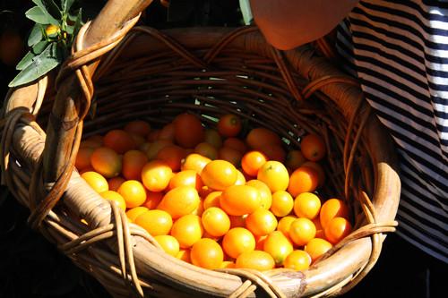 Basket o'cumquats