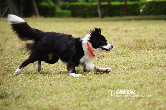 K-x試拍-狗狗Jump&Go!