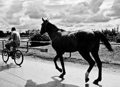 taking the horse home (Geo Den) Tags: delete10 delete9 delete5 delete2 delete6 delete7 delete8 delete3 delete delete4 save deletedbydeletemeuncensored