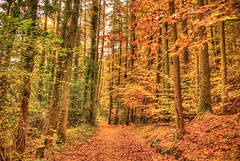 Yellow and Green (MarkE_T) Tags: autumn trees wales pentax path hdr fallenleaves pentaxk10d swissvalleyreservoir
