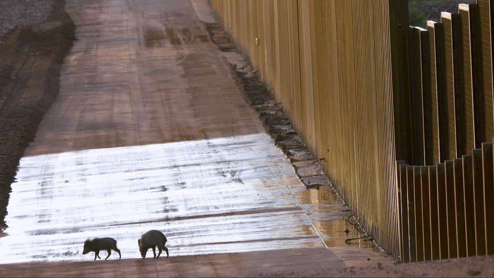 Wildlife and the steel US-Mexico wall