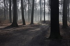 Back light (Machiel Taal) Tags: forest nederland ede autofocus wow1 wow2 wow3 mygearandme mygearandmepremium mygearandmebronze mygearandmesilver mygearandmegold mygearandmeplatinum mygearandmediamond flickrstruereflection1 flickrstruereflection2 flickrstruereflection3 flickrstruereflection4 flickrstruereflection5 flickrstruereflection6 flickrstruereflection7 flickrstruereflectionexcellence rememberthatmomentlevel4 rememberthatmomentlevel1 rememberthatmomentlevel2 rememberthatmomentlevel3