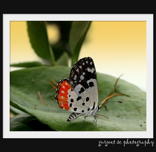 HAPPINESS IS LIKE A BUTTERFLY ..........................