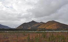 08195 Dalton Highway - Pipeline (hogan3774) Tags: alaska pipeline daltonhighway borealforest transalaskapipeline