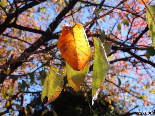 BlogJardin-101204-automne-05