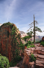 angel's landing: doing a double take (manyfires) Tags: summer tree film landscape utah nationalpark rocks hiking trail backpacking zion angelslanding zionnationalpark elevation heights nikonfm scoutslookout