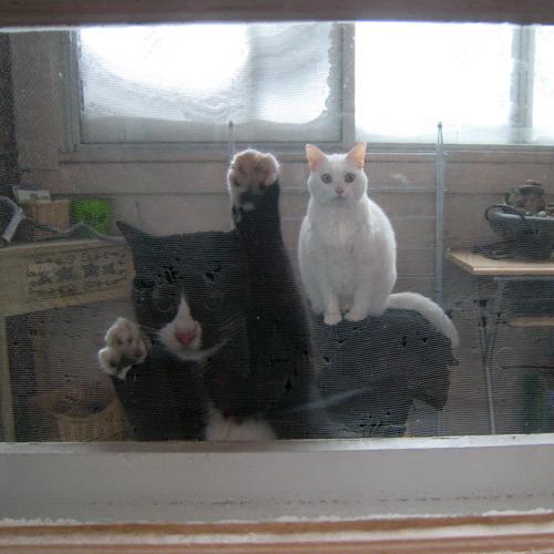 Chat sur le balcon