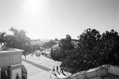 san diego (balrogs kill) Tags: ocean trees light sky blackandwhite bw sun film 35mm harbor pier sandiego conventioncenter southerncalifornia breeze kodakbw400cn sfn c41bw societyforneuroscience