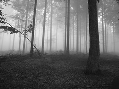 Foggy Forest 1