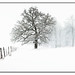 720 px winter-tree-wisconsin-matt-anderson-fine-art-landscape-photography-large