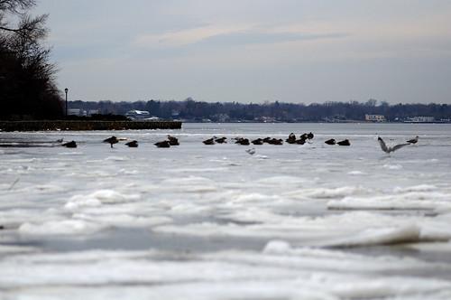 Frozen Sea at Manhasset Bay