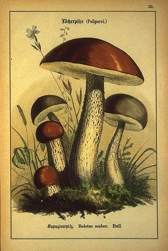004-Allgemein verbreitete eßbare und schädliche Pilze 1876- Wilhelm von Ahles