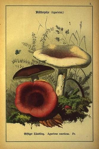 011-Allgemein verbreitete eßbare und schädliche Pilze 1876- Wilhelm von Ahles