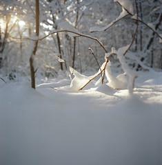 Rollei (J. Bouwmeester) Tags: winter snow 120 film rolleiflex december kodak medium format 35 2010 400nc