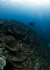 ulongcoral4955pws (gerb) Tags: ocean topv111 coral ilovenature nice topv333 underwater scuba diver d200 reef palau tvp aquatica 105mmf28gfisheye micronesea