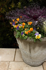 (bonnie_lass13) Tags: flowers plant nc wilmington potted catchycolorsyellow catchycolorsgreen catchycolorspurple catchycolorsorange catchycolorsviolet