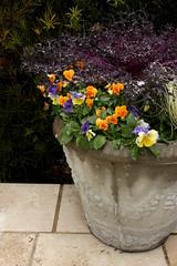 (bonnie_lass13) Tags: flowers plant nc wilmington potted catchycolorsyellow catchycolorsgreen catchycolorspurple catchycolorsorange catchycolorsviolet
