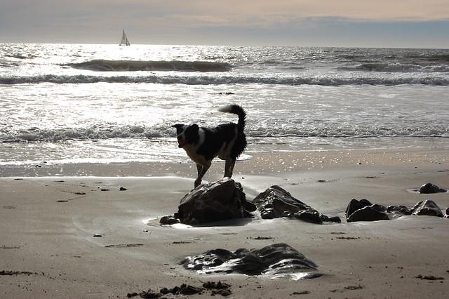 Hendry's Dog Beach