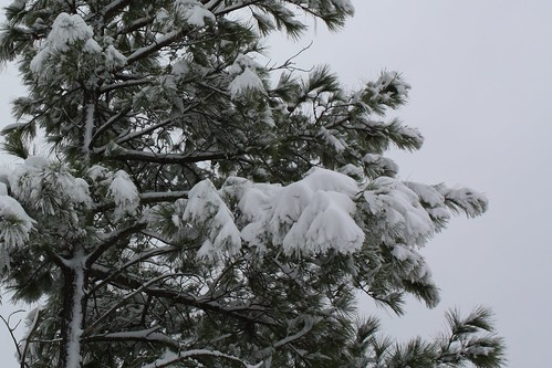Pretty branches covered in snow
