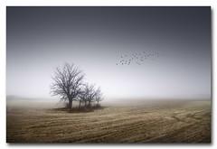 Perdido en la niebla 3 (jose.singla) Tags: espaa color tree birds fog canon landscape cool spain sigma paisaje murcia pjaros rbol otoo invierno minimalismo fro 1020 lorca niebla frio perdido 400d