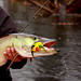 """Willen's first musky fly gets chowed <a style=""""margin-left:10px; font-size:0.8em;"""" href=""""http://www.flickr.com/photos/57578171@N06/5298490078/"""" target=""""_blank"""">@flickr</a>"""