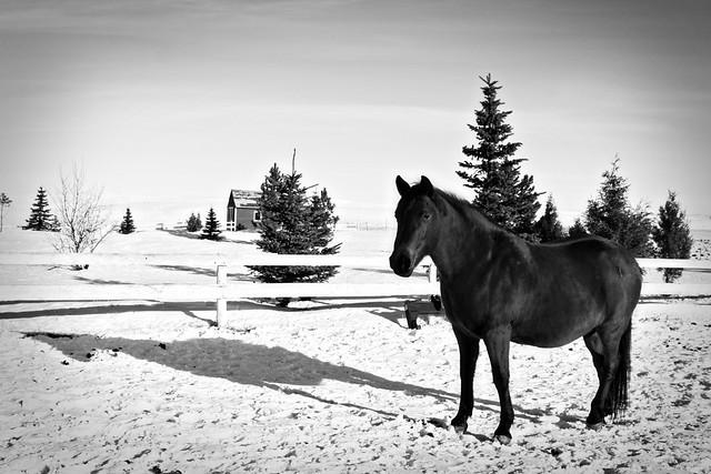 lissa-horse