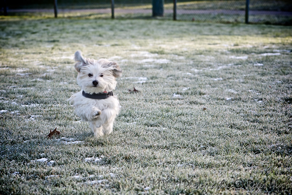 Obi running in the frost.