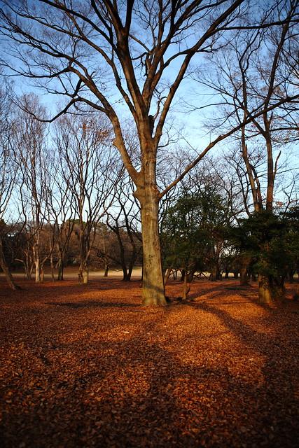 枝々の影模様