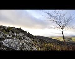 Bare...© (Darren-Muir) Tags: sky tree landscape la scotland nikon dof bokeh stones scottish hills nikkor barren borders rugged d90