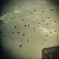 (sommerpfuetze) Tags: city winter sky berlin texture birds dark square crow berlinmitte rooky ttv fakettv mitdemstrom