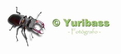 Nuevo www.yuribass.com
