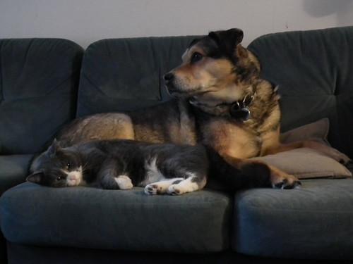 Sacha and Sam