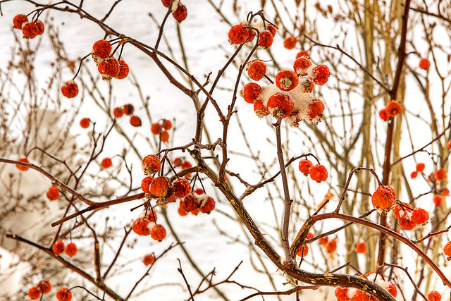 Berries Forgetting It's Winter