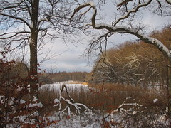 Winterlandscape, Hellebk (Betty Olsen) Tags: wood trees sky snow ice nature leaves clouds denmark view rush winterlandscape abigfave hellebk