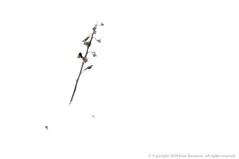 Alone (Ivan Sorensen   www.ivansorensenphotography.com) Tags: winter light white snow ontario canada cold art nature leaves landscape frozen nikon natural bright fineart hamilton twig colourful hfg d90 niksoftware capturenx2 nikcep