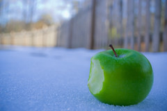 Day Sixteen:365 {Explored} (dr.clavell) Tags: apple fruits 365 365project daysixteen flickrelite beyondbokeh nikond3100 3652011 sammyclavell 2011inphotos 365the2011edition 3652011edition 365the2011edtion jan162011 fruitinthesnow