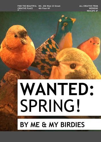 Mijn vogeltjes