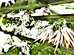 absence of carrots (suchalovelycolor4u) Tags: white green vegetables carrots