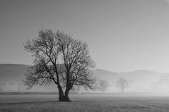 Tree (PH56) Tags: mist tree field weather fog nikkor50mmf18d nikond90